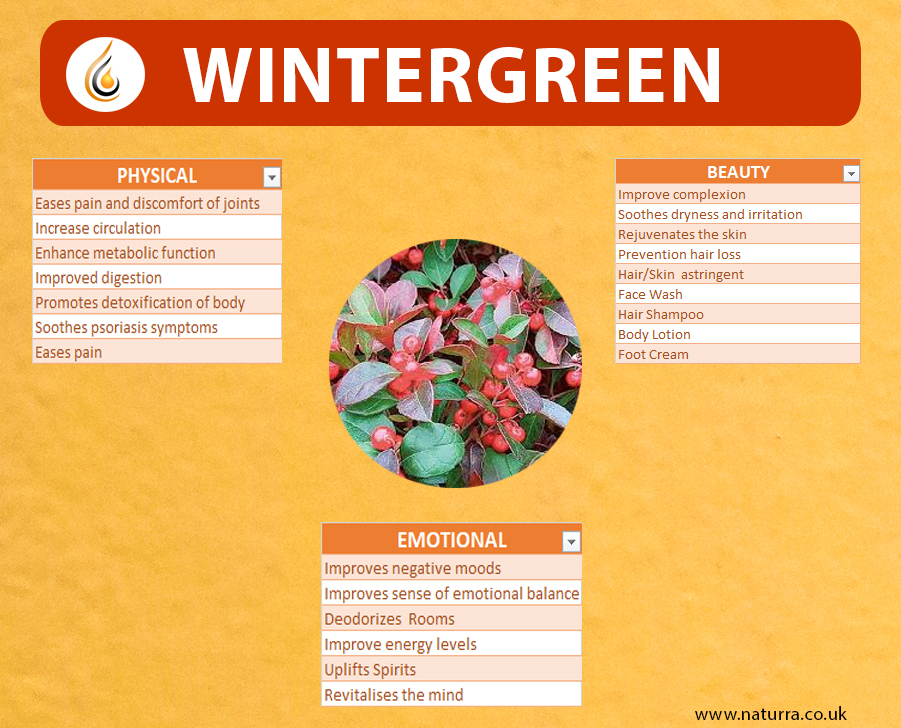 Getting to know Wintergreen Essential OIl